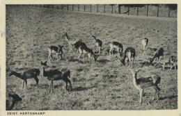 Zeist - Hertenkamp (AA39 2.185 - Zeist