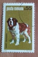 """Chien """"Saint  Bernard"""" (Animaux) - Roumanie - 1981 - 1948-.... Républiques"""