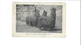 PEROU PERU  ALPACAS OF THE ANDEAN HIGHLANDS  OF PERU   ****        A  SAISIR **** - Pérou