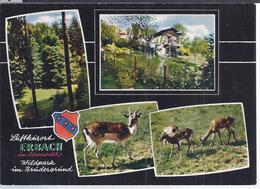 AK-41324   -  Erbach Wildpark Im Brudergrund - Mehrbild (4) - Erbach
