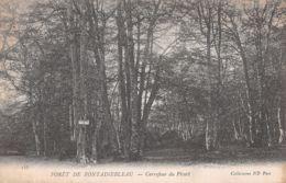 77-FONTAINEBLEAU-N°1105-C/0073 - Fontainebleau