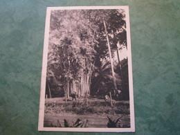 INDOCHINE - Bambous Altiers (publicité Au Verso) - Cartes Postales