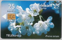 PHONE CARD-SLOVENIA (E45.15.5 - Slovenia