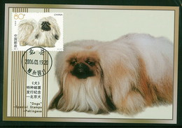 China 2006 Dog Chien Maximum Card 1V - Hunde