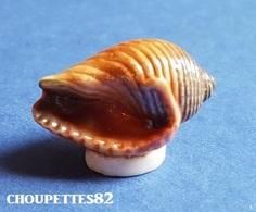 Fèves Fève Mer/crustacé/coquillage Dolium Perdrix*610* - Fèves