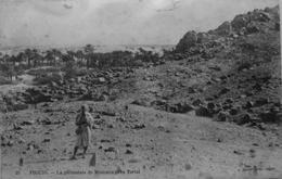 Figuig : La Palmeraie De Mesoura Près Tarlat - Maroc