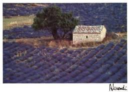 CPM - Photo ALESSANDRI - Provence - Edition Images & Lumières / N°306 - Provence-Alpes-Côte D'Azur