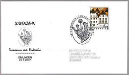 LOWENZHAN - DIENTE DE LEON - Taraxacum Ruderalia. Gmunden 2007 - Vegetales
