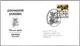 GEWOHNLICHER SCHNEEBALL - Viburum Opulus. Gmunden 2007 - Vegetales