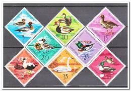 Albanië 1975, Postfris MNH, Birds - Albania