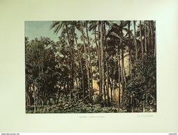 ILE DE LA REUNION-SAINT DENIS,FORET De COCOTIERS-1890-6288 - Estampas & Grabados