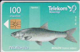 #03 - SLOVENIA-16 - FISH - BOLEN - Slovénie