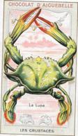 """Chromo Chocolat D'Aiguebelle - """"Les Crustacés"""" - La Lupa - Aiguebelle"""