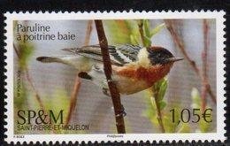 ST. PIERRE ET MIQUELON, SPM, 2019, MNH, BIRDS,1v - Vogels