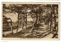 Putte - Mastbosschen Aan De Duinen - Circulée - Uitg. Photo Hoelen Cappellen N° 362 - 2 Scans - Putte