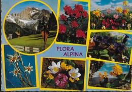 FLORA ALPINA - EDIZ. CECAMI #211 - VIAGGIATA 1978 - Fiori