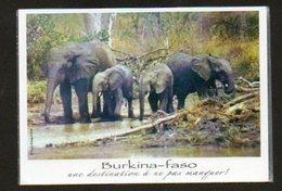 BURKINA FASO - Elephants - Burkina Faso
