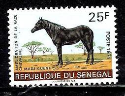 SENEGAL 349** 25f Amélioration De La Race Chevaline Madjiguene - Sénégal (1960-...)