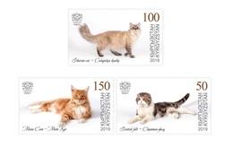 H01 Kyrgyzstan 2019 Mi# 125-27 Cats Katzen MNH ** Postfrisch - Kirgisistan