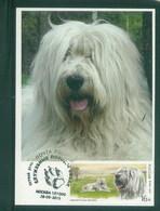 Russia 2015 Dog Chien Maximum Card 1V - Cani