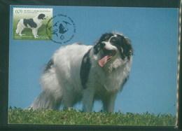 Bosna 2007 Dog Chien Maximumt Card 1V - Cani