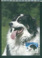 Bosna 2007 Dog Chien Maximum Card 1V - Cani