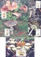 2016. Transnistria, Mushrooms, 5 Maxicards, Mint/** - Moldavie
