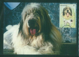 Romania 2012 Dog Chien Maximum Card 1V - Cani