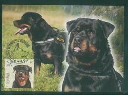 Romania 2015 Dog Chien Maximum Card 1V - Sao Tome Et Principe