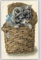 51326107 - Katzen - Cats
