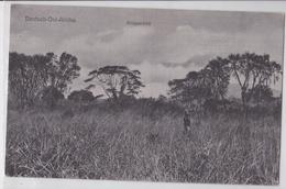 Tanzanie Tanzania Deutsch-Ost-Afrika - Steppenbild - Tanzanie