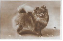 Pomeranian Dog, Spitz, Loulou, Keeshond, Photocard. Chien, Dog, Hund, Cane. Lovely Card, Valentine's - Chiens