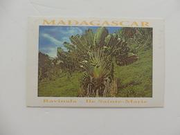 Madagascar, Ravinala - Ile Sainte-Marie. - Madagascar