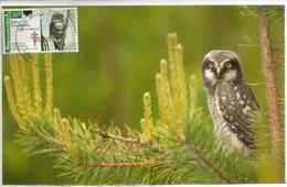 Chouette Tachetée, Spotted Owl, Carte-maximum Mexique - Mexique