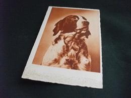 PICCOLO FORMATO CANE DOG CHIEN HUND 1° PIANO - Cani