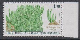 TAAF 1988 Plants 1v ** Mnh (TA225) - Ongebruikt