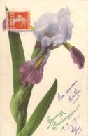 Carte Illustrée D'une Tige De Fleurs D'Iris Martin Rommel Series 583 1910 - Flowers