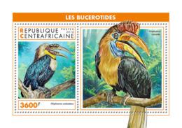 Central Africa 2018  Fauna  Hornbills   Birds S201902 - Central African Republic
