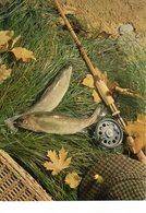Tableau De Pêche ( Poisson S - Pêche