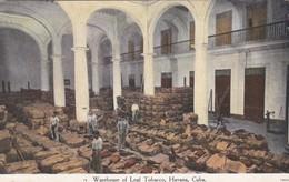 CARTOLINA - POSTCARD - CUBA - WAREHOUSE OF LEAF TABACCO, HAVANA - Cuba