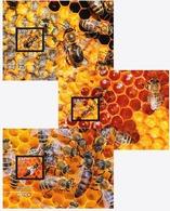 Croatia 2019 Set 3 MC Maxi Cards Carniolan Honey Bee Bees Abeille Abeilles - Bienen