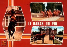 CPM - HARAS Du PIN - Elevage Du CHEVAL Français - Chevaux