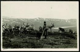 Ref 1279 - Real Photo Ethnic Postcard - Lapplander Dog & Reindeer - Sweden - Europe