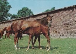 CAVALLO E PONY AUTENTICA 100% - Cavalli