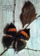 PAPILLONS Exotiques - Kallima Inachus - Papillon Feuille (Inde-Birmanie-Chine) - Col. Sabat Paris - Edit D'art Yvon N'12 - Vlinders
