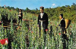 "THAILANDE - Meo Hill Tribe Girls In The Opium Poppy (flowers) Field At ""Golden Tringle"" - Thaïlande"