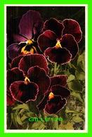 FLEURS - VIOLA TRICOLOR, STIEFMUTTERCHEN - PENSÉE, PANSY, PANZEA - - Fleurs