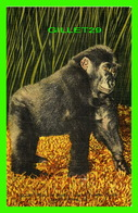 SINGES - BULU, THE MONKEY - JUNGLES FAMOUS GORILLA SOUTH OF MIAMI, FL - GULF STREAM CARD - - Singes