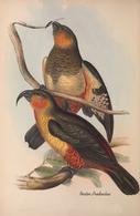 CARTE THÈME OISEAUX  D'AUSTRALIE J.GOULD NESTOR PRODUCTUS - Birds