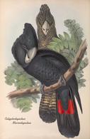 CARTE THÈME OISEAUX  D'AUSTRALIE J.GOULD CALIPTORHYNTUS MACRORHYNTUS - Birds